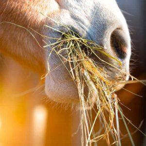 Aliments pour chevaux
