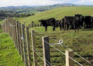 Clôture  pour les Vaches